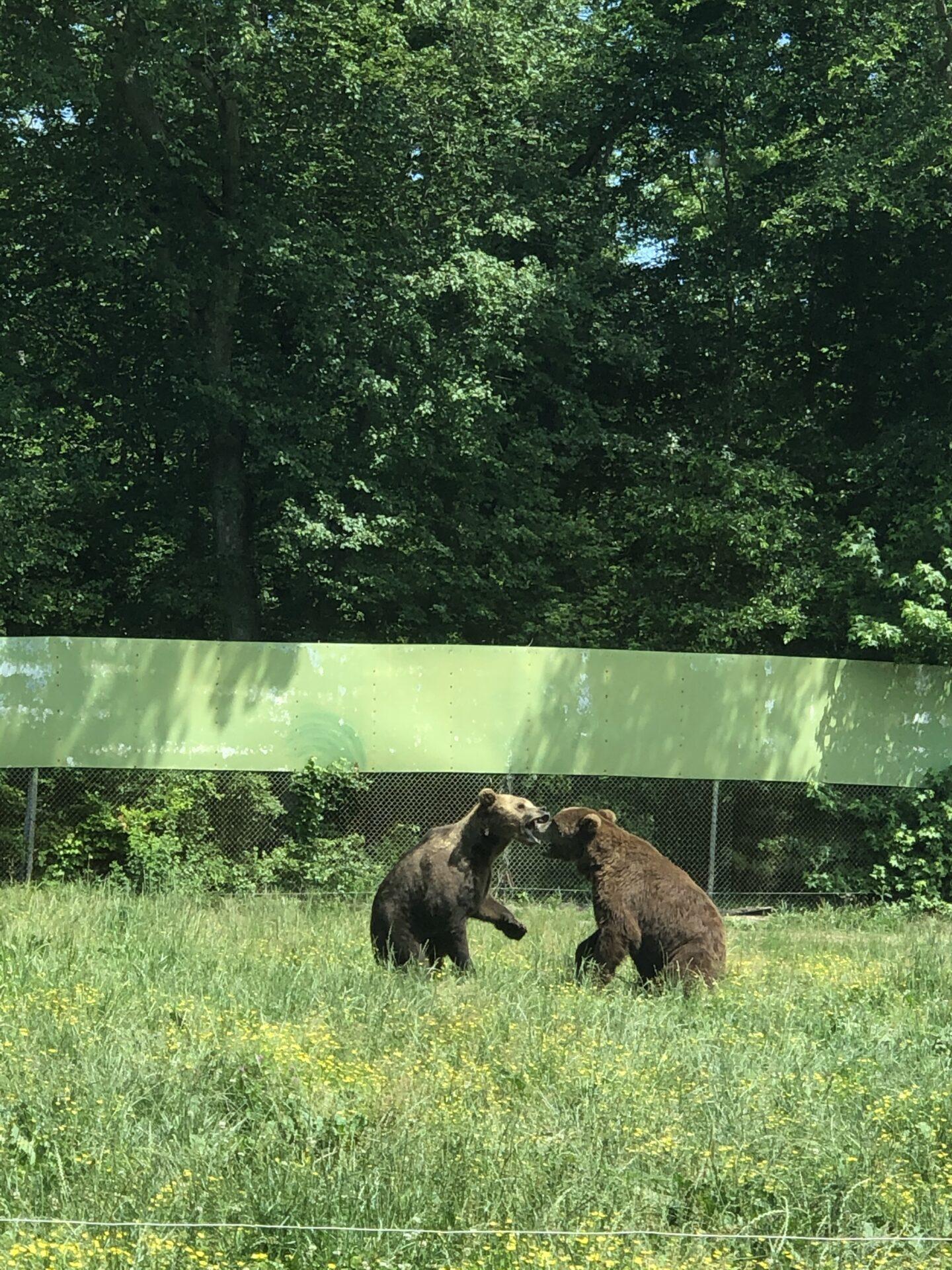 Great Adventure Safari bears