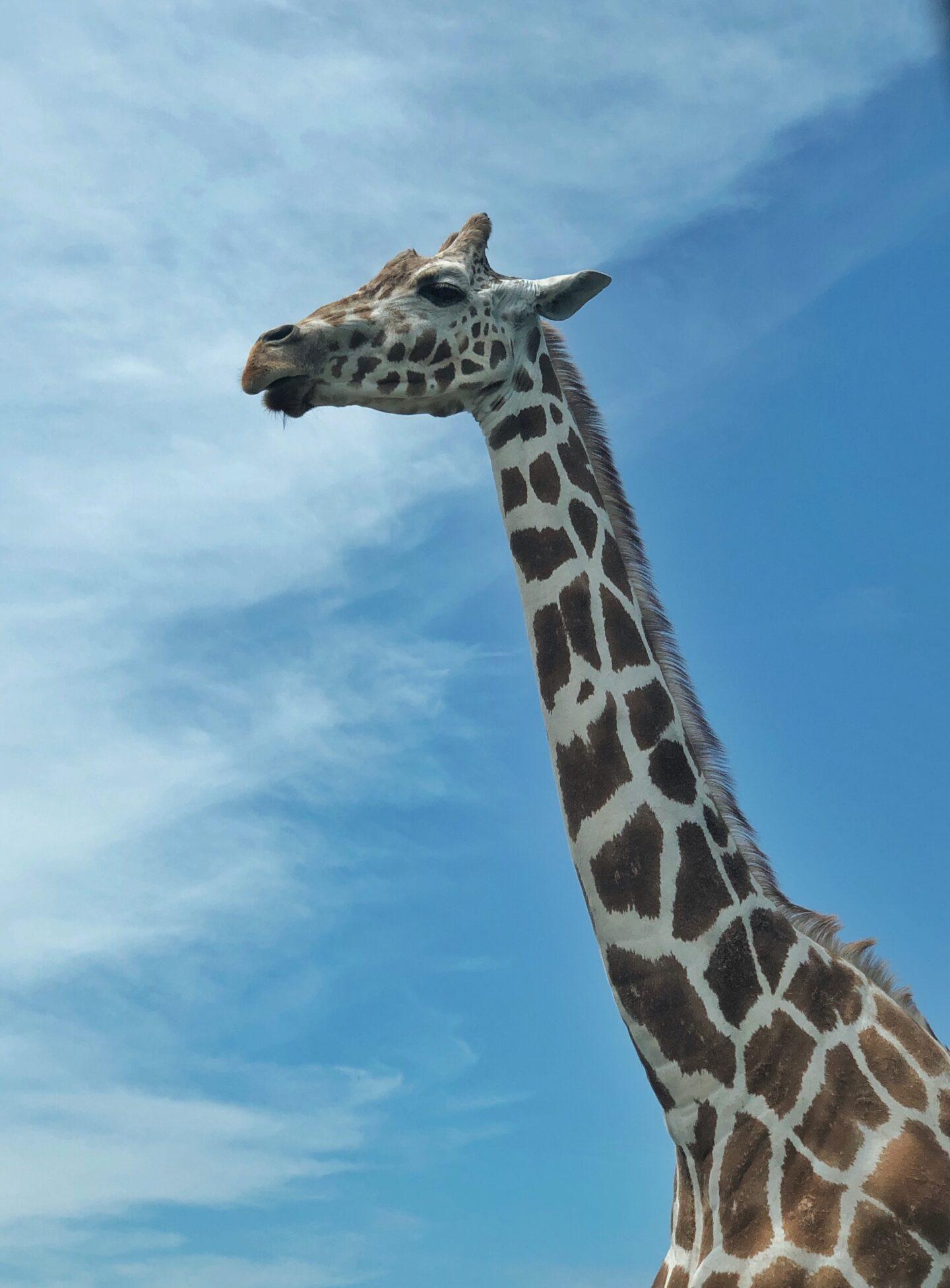 Great Adventure Animal Safari