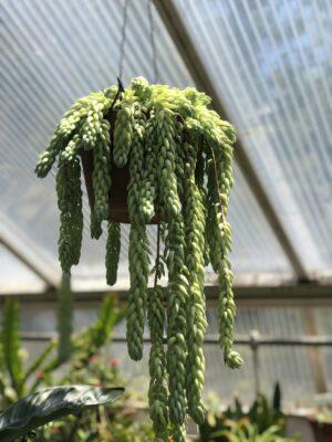 plant at NJ garden