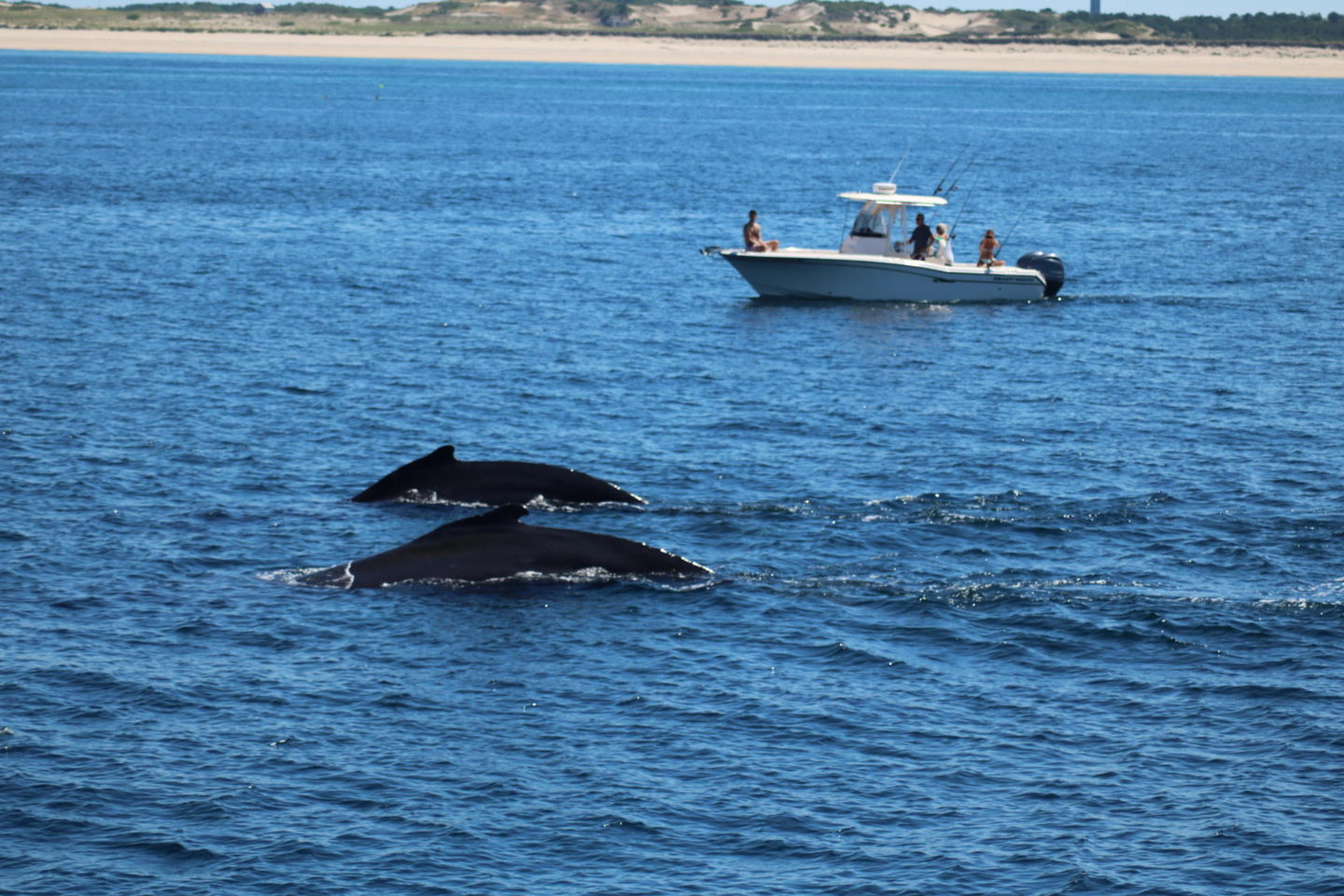 Whale Watching//Provincetown, MA