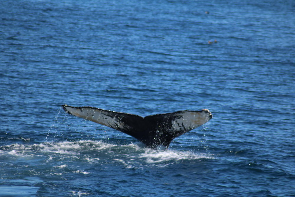 Travel Diary Pt.1 // Whale Watching in Cape Cod
