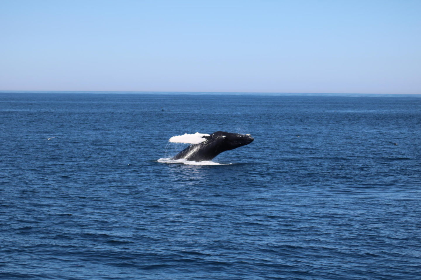 Whale Watching//Dolphin Fleet Provincetown, MA