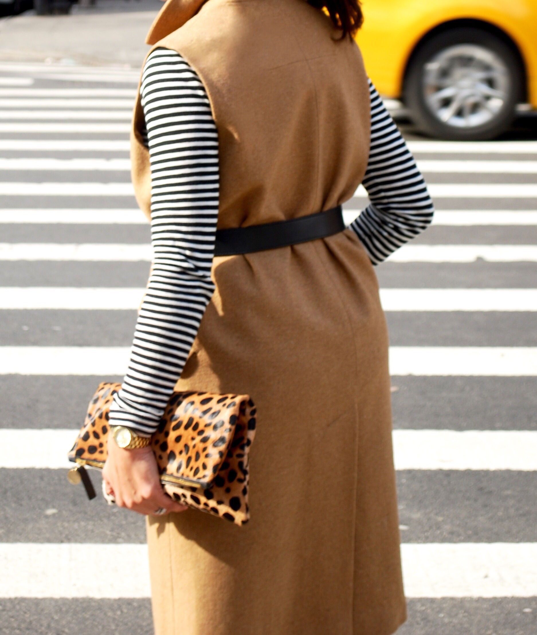 Camel and stripes