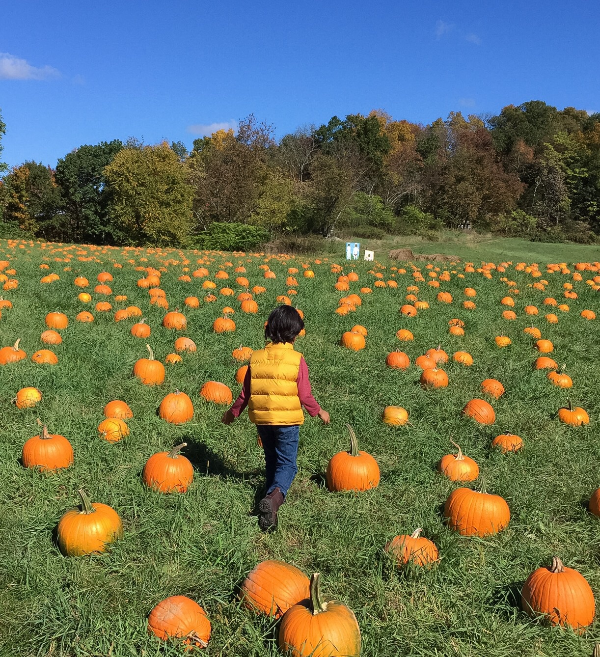 Pumpkin patch with kids